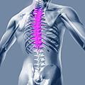 Коррекция осанки грудного отдела позвоночника